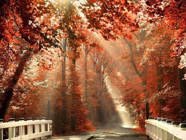 Image du Blog aliana.centerblog.net